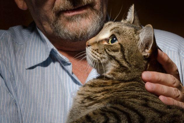 10 علامات تبين أن قطتك تقدمت في العمر