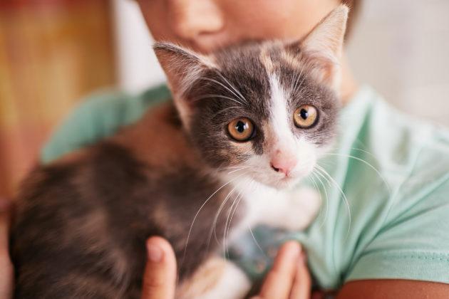 """تربية القطط تحمي الأطفال من """"الربو"""""""