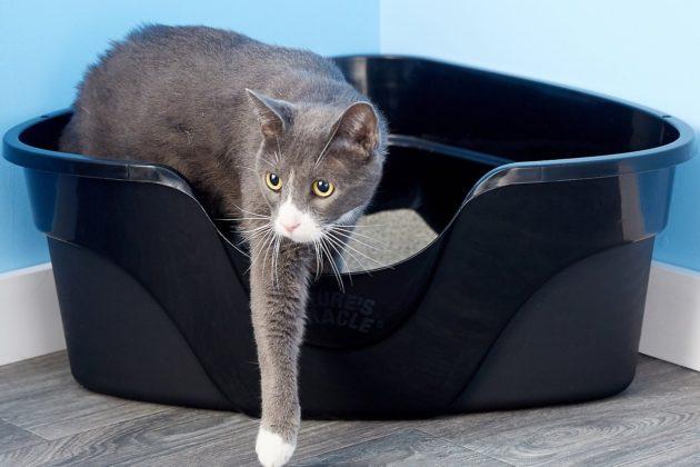 فضلات القطط: إليكم بعض النصائح للتخلص منها