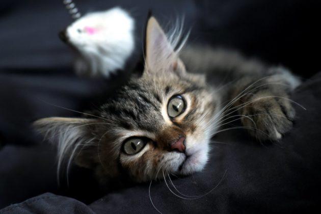 هل القطط كائنات انتهازية؟