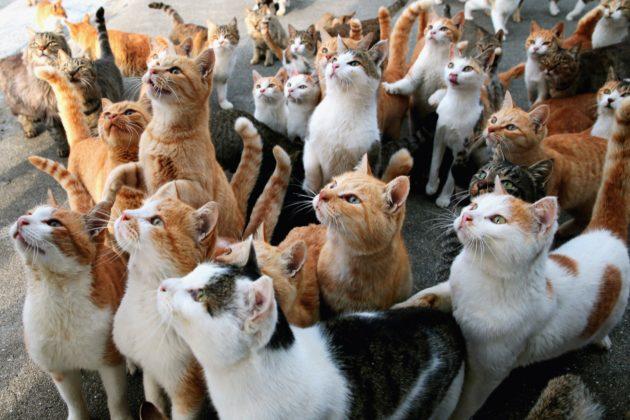 جزيرة القطط في اليابان.. قططٌ أكثر من السكان!