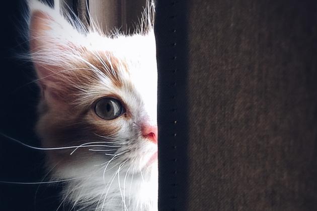 فوائد كورونا.. الصين تحظر أكل القطط!