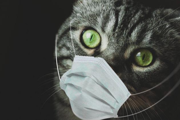 هل تنقل القطط فيروس كورونا للبشر؟