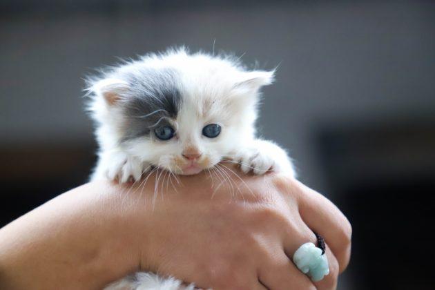 ما هي المدة المناسبة لفصل القطط الصغيرة عن أمها؟