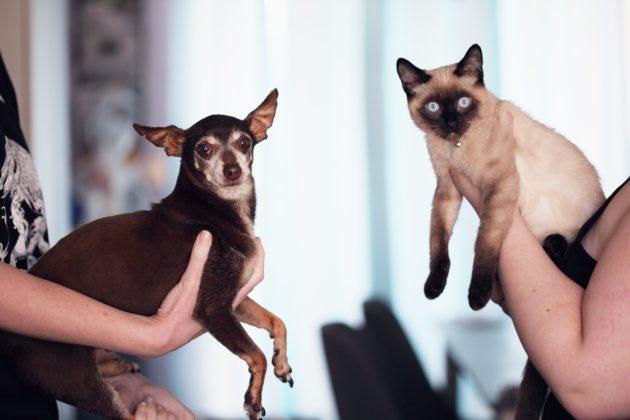 دراسة.. القطط أفضل من الكلاب!