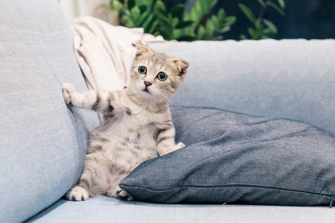 هل لتربية القطط فوائد علمية؟